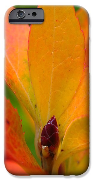 Orange Leaves iPhone Case by Juergen Roth