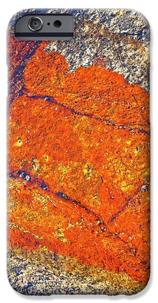 Orange lichen iPhone Case by Heiko Koehrer-Wagner