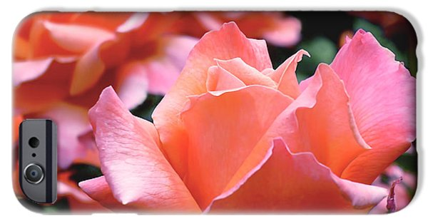 Flower Photographs iPhone Cases - Orange-Pink Roses  iPhone Case by Rona Black