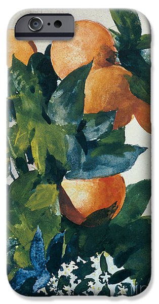 Fruit Tree iPhone Cases - Oranges on a Branch iPhone Case by Winslow Homer