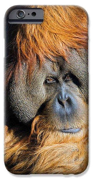Orangutan iPhone Cases - Orangutan iPhone Case by Randall Ingalls