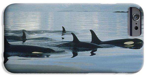 Marine iPhone Cases - Orca Pod Johnstone Strait Canada iPhone Case by Flip Nicklin