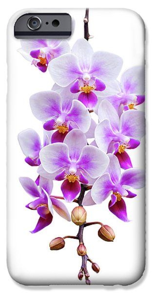 Orchid iPhone Cases - Orchid iPhone Case by Meirion Matthias