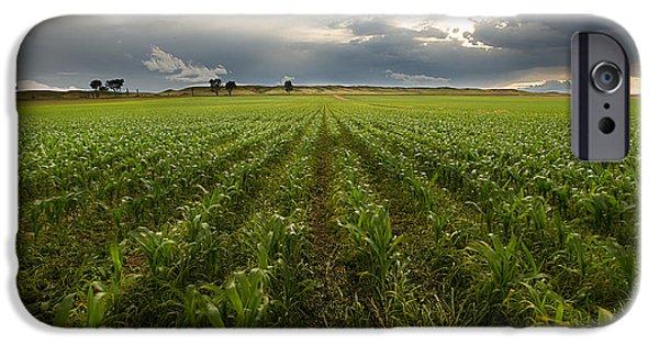 Nebraska iPhone Cases - Organized Corn iPhone Case by Cody Lere