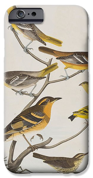 Finch iPhone Cases - Orioles Thrushes and Goldfinches iPhone Case by John James Audubon