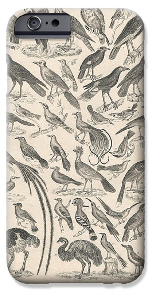 Crows Drawings iPhone Cases - Ornithology iPhone Case by Captn Brown