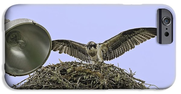 Lincoln iPhone Cases - Osprey Fledgling iPhone Case by Tim Moore