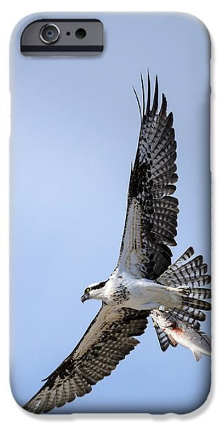 Animals Photographs iPhone Cases - Osprey Soaring Away With A Redfish iPhone Case by Debra Martz