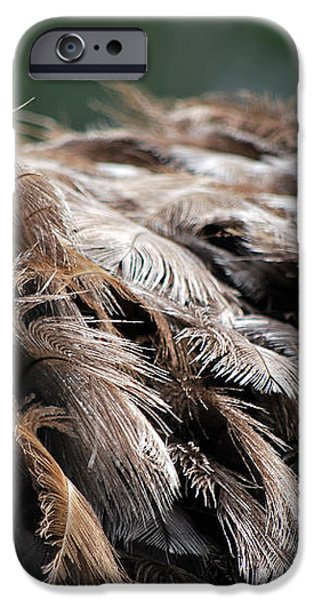 Ostrich Feathers iPhone Case by Teresa Blanton