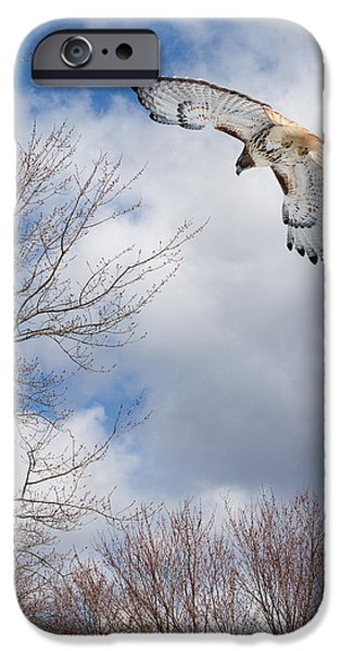 Hawk iPhone Cases - Out of the blue iPhone Case by Bill  Wakeley