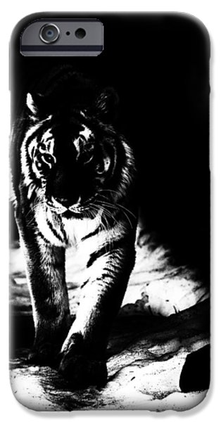 The Tiger iPhone Cases - Out Of The Shadows iPhone Case by Karol  Livote