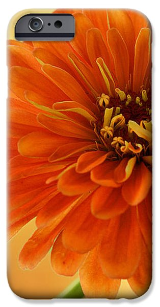 Outrageous Orange iPhone Case by Sandy Keeton