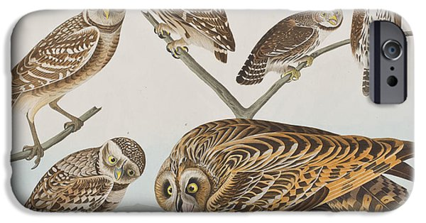 Audubon iPhone Cases - Owls iPhone Case by John James Audubon