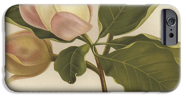 Flora Drawings iPhone Cases - Oyama Magnolia iPhone Case by English School