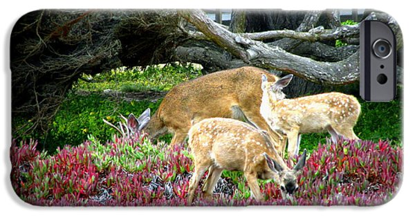 Business Photographs iPhone Cases - Pacific Grove Deer Feeding II iPhone Case by Joyce Dickens