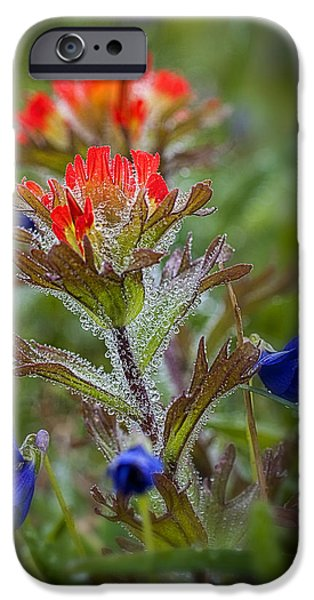 Mist iPhone Cases - Paintbrush in the Mist iPhone Case by Robert Potts