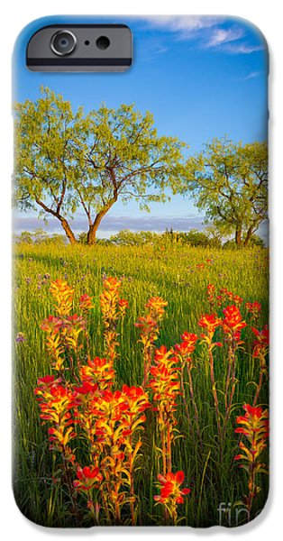 Pasture Scenes Photographs iPhone Cases - Paintbrush on Fire iPhone Case by Inge Johnsson