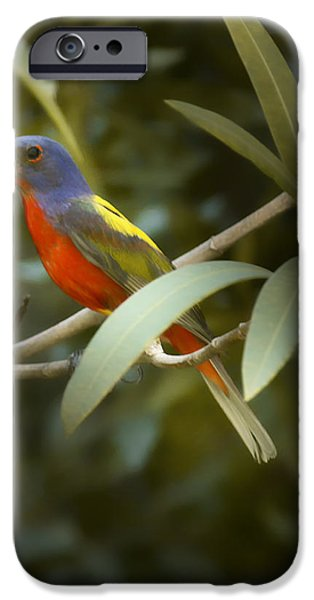 Bunting iPhone Cases - Painted Bunting Male iPhone Case by Phill  Doherty