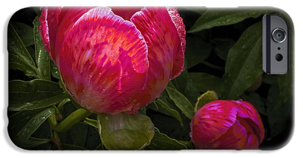 Flora iPhone Cases - Painted Peony  iPhone Case by ArtissiMo Photography