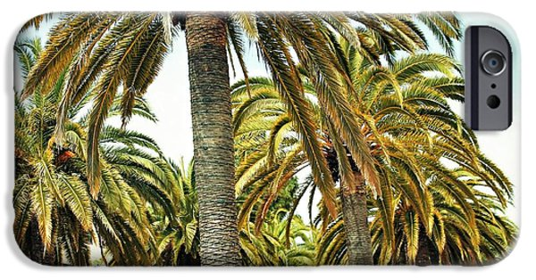 Finds A Way iPhone Cases - Palm Glory iPhone Case by Philip Hennen