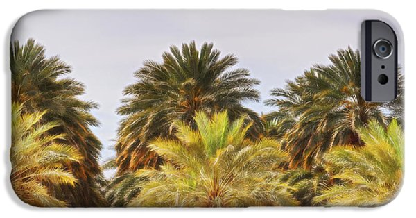 Arizonia iPhone Cases - Palm Grove iPhone Case by Dee Browning