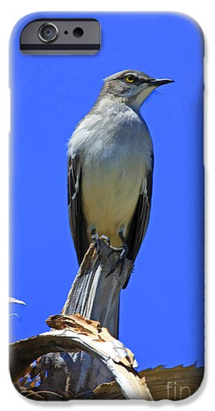 Palm Mocking Bird iPhone Case by Deborah Benoit