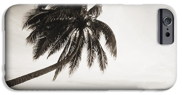 Overhang iPhone Cases - Palm Over Beach iPhone Case by Ron Dahlquist - Printscapes