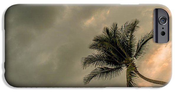 Beach Landscape iPhone Cases - Palm Tree II iPhone Case by Totto Ponce