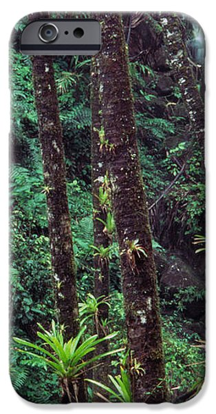 Palm Trunks and Waterfall El Yunque iPhone Case by Thomas R Fletcher