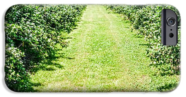Berry iPhone Cases - Panorama Of Rapberry Farm Isle iPhone Case by Alexandr Grichenko