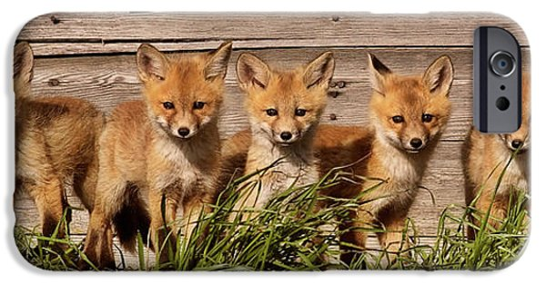 Indiana Springs iPhone Cases - Panoramic Fox Kits iPhone Case by Mark Duffy
