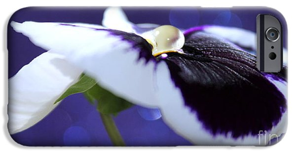 Innocence iPhone Cases - Pansy Jewel iPhone Case by Krissy Katsimbras