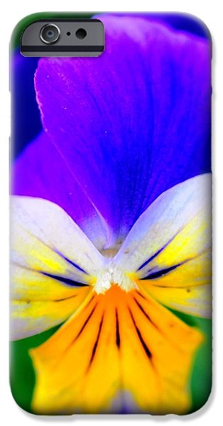 Pansy iPhone Case by Kathleen Struckle