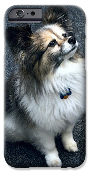 Tiny Dogs iPhone Cases - Papillon Dog iPhone Case by Daniel Hagerman