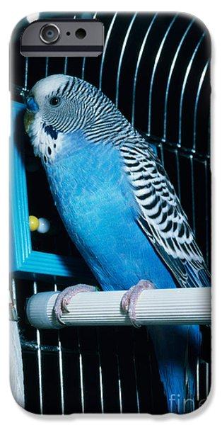 Parakeet iPhone Cases - Parakeet iPhone Case by John Kaprielian