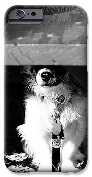 Dogs iPhone Cases - Park Bench Puppy iPhone Case by Robert Yaeger