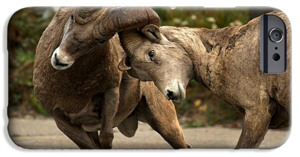 Animals Photographs iPhone Cases - Parking Lot Brawl iPhone Case by Adam Jewell