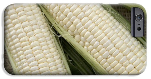 Sweet Corn iPhone Cases - Partially Husked Sweet Corn iPhone Case by Inga Spence