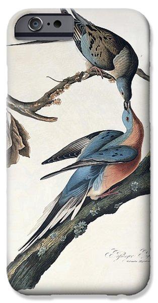 Carrier iPhone Cases - Passenger Pigeon iPhone Case by John James Audubon