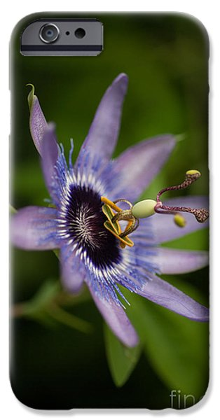Passion iPhone Cases - Passiflora iPhone Case by Mike Reid