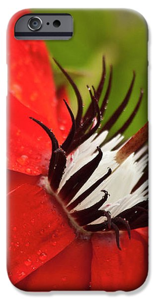 Passionate flower iPhone Case by Heiko Koehrer-Wagner