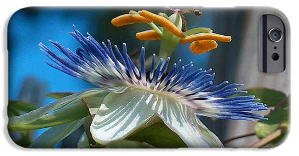 Passionflower iPhone Cases - PassionFlower iPhone Case by Racquel Morgan
