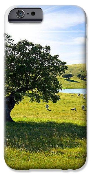 Pasturing cows iPhone Case by Carlos Caetano