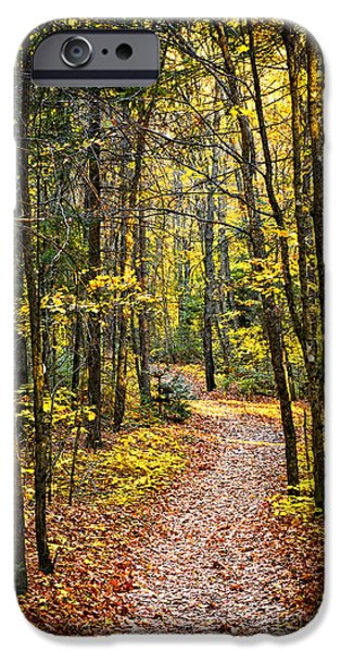 Path iPhone Cases - Path in fall forest iPhone Case by Elena Elisseeva