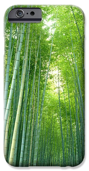 Diffusion iPhone Cases - Path Through Bamboo Forest Kyoto Japan iPhone Case by Panoramic Images
