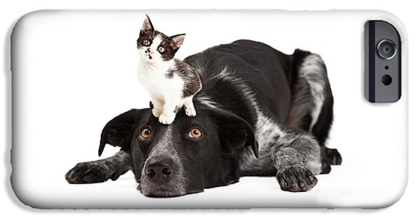 Cutout Photographs iPhone Cases - Patient Border Collie With Little Kitten on Head iPhone Case by Susan  Schmitz