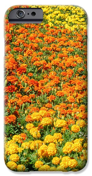 Prescott iPhone Cases - Patterns in Flowers iPhone Case by Ralph Staples