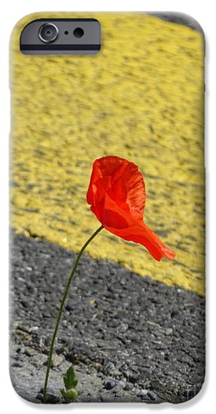 Asphalt iPhone Cases - Pavement poppy iPhone Case by Brian Boyle