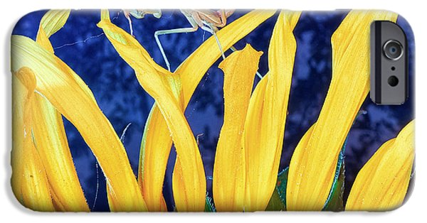 Mantises iPhone Cases - Peace Brings Death iPhone Case by TC Morgan