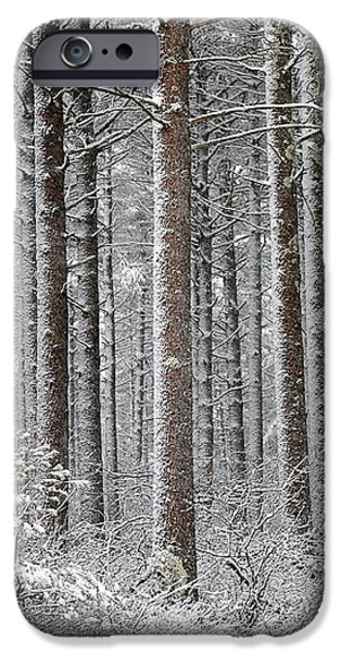 Peace in the Woods iPhone Case by Catherine Reusch  Daley